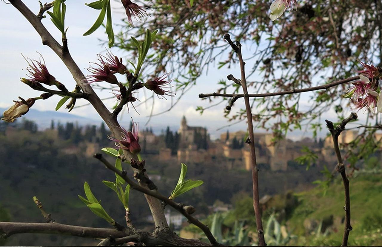 Despertar en Granada, andar antes de empezar el día.