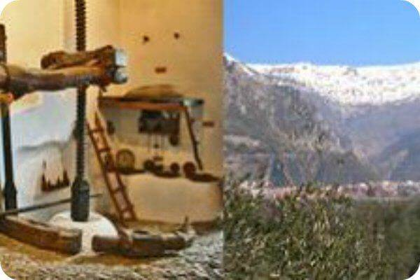 Circuito del aceite de oliva en Granada
