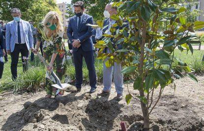 plantamos magnolios para compensar nuestra huella de carbono