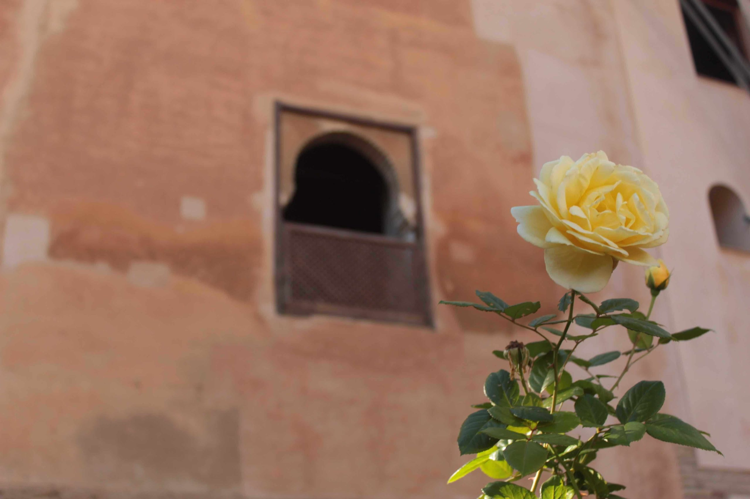 flowers in the Alhambra